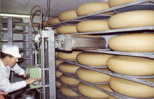 t_queso_emmental