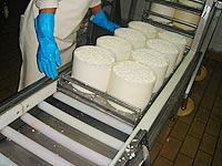 moldeoado-del-queso